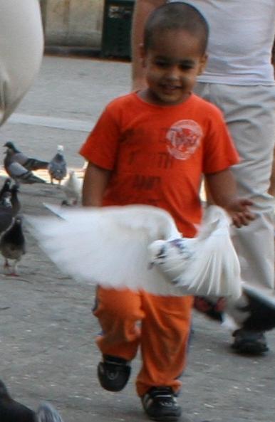 niño con paloma blanca