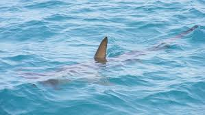 tiburon-cuba